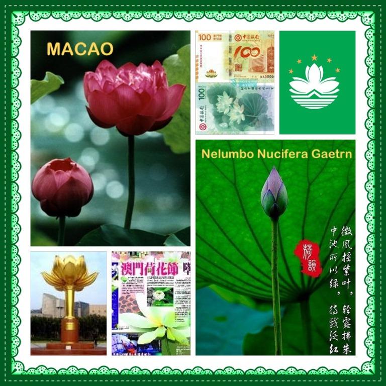 National Flower Series Guai Shu Shu