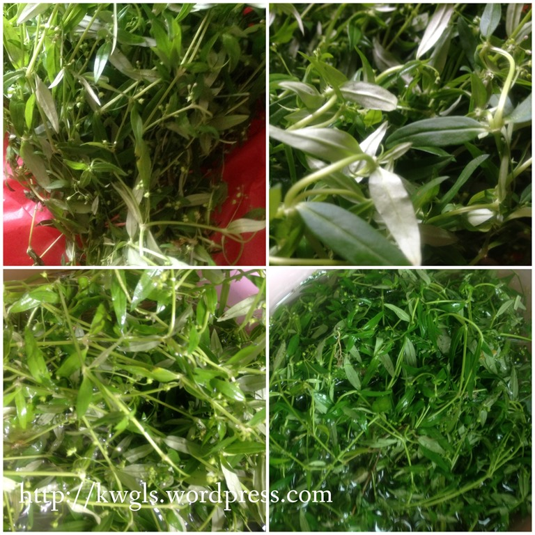 Snake tongue tea gosh i am going away guai soak your snake tongue grass in clean water for 15 minutes mightylinksfo Choice Image